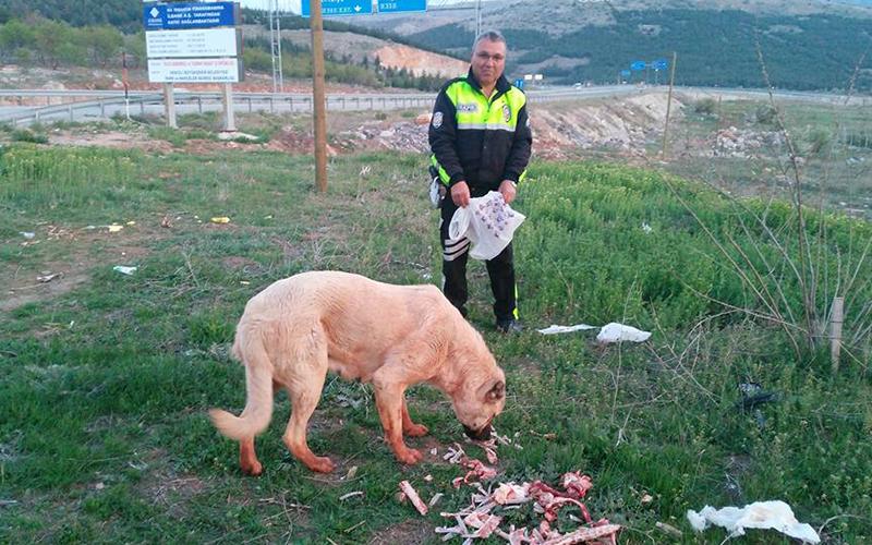 Çöpe gidecek atıklarla sokak hayvanlarını besliyorlar