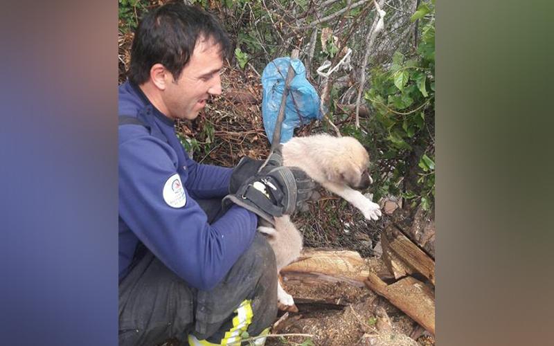 Yavru köpeği kurtarma seferberliği