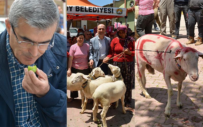 Sarayköy Festivali'nde en iyiler yarıştı