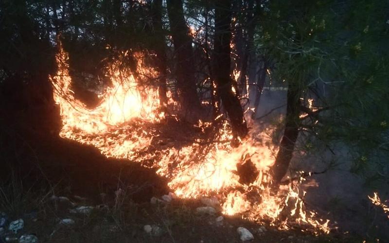 Ormanı yangını büyümeden söndürüldü