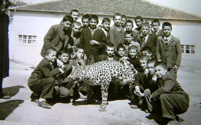 Denizli'de yaşayan Anadolu leoparının fotoğrafı albümden çıktı