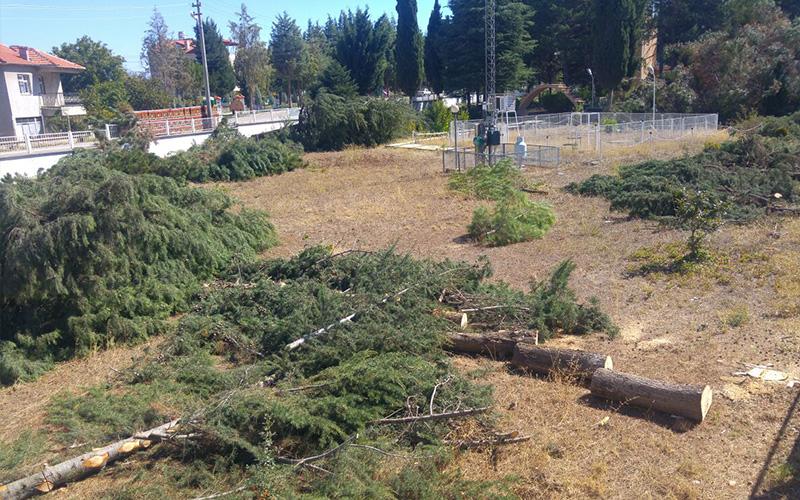 Bu ağaçları neden kestiniz?