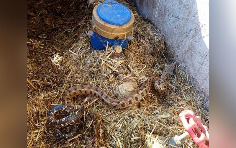 Sayaca çöreklenen engerek yılanıyla irkildi