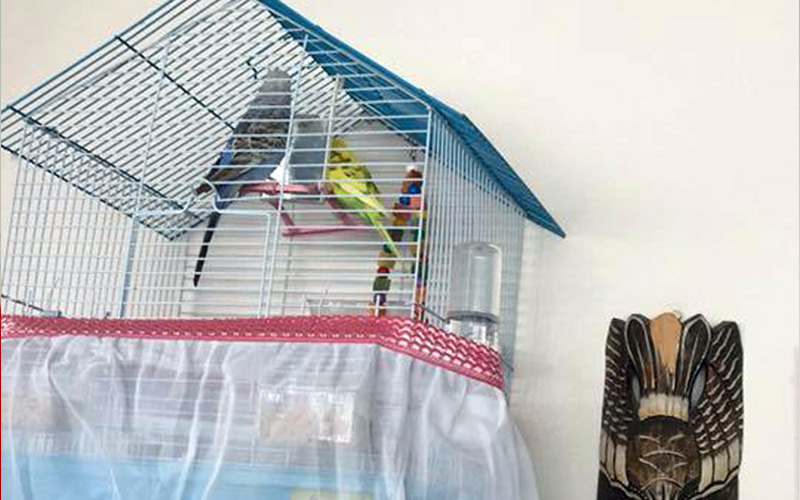 Kuş da çaldılar ziynet eşyası da