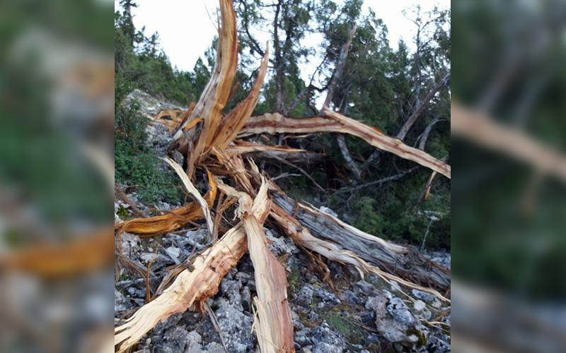 Yıldırım ağacı parça parça etti