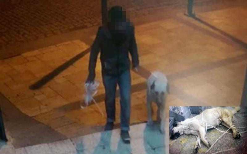 Köpeğe tecavüz eden ahlaksızı kameralar kaydetti