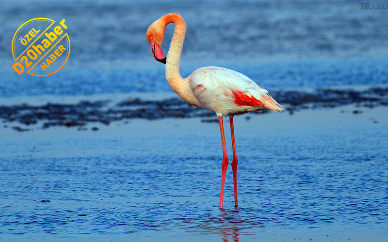Denizli kuş sayımında Türkiye birincisi
