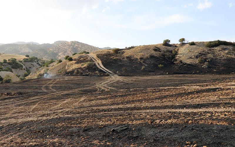 250 dekar ekili alan yandı