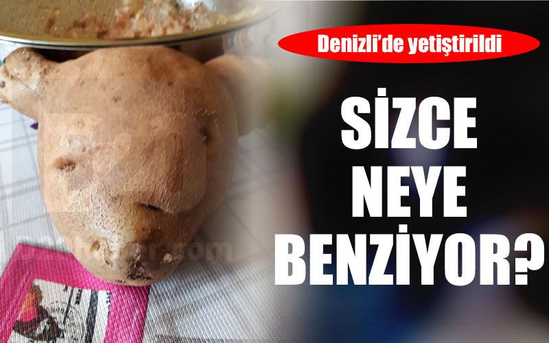 Bu patates sizce neye benziyor?