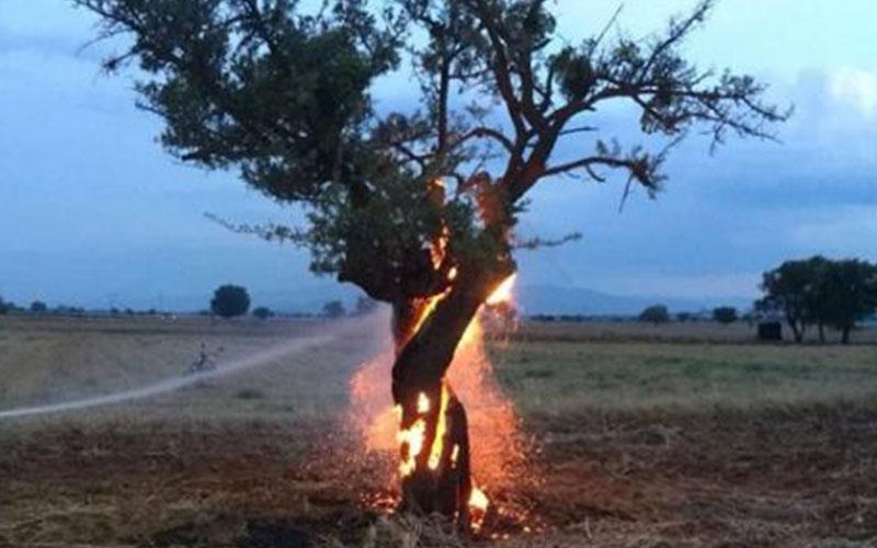 Ağaç alev alev yandı ama nedenini bilen yok