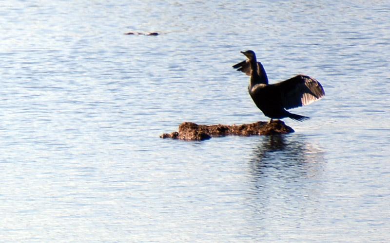 Denizli'de 3 saatte 38 kuş türü sayımı yapıldı