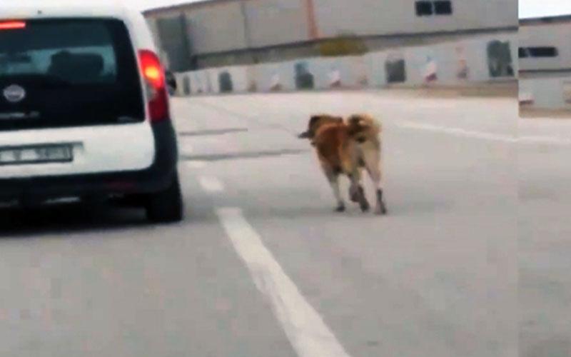 Köpeğe yapılan 'nerede insanlık' dedirtti