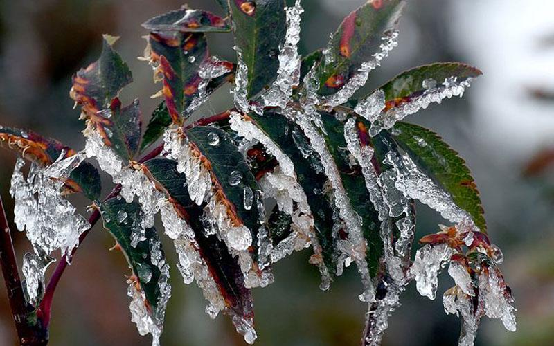 Sıcaklık 7-8 derece düşüyor, gece soğukları donduracak