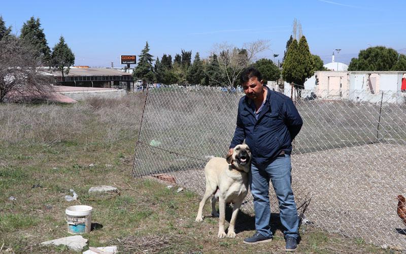 9 kangal yavrusu çalındı, sahibi polise koştu