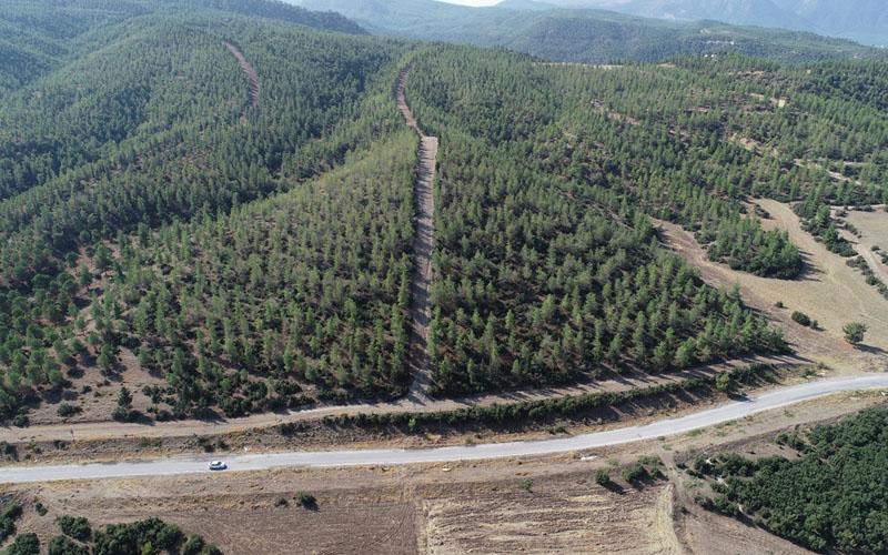 Karacabey: Tırtılla ormanlar yok olmaz