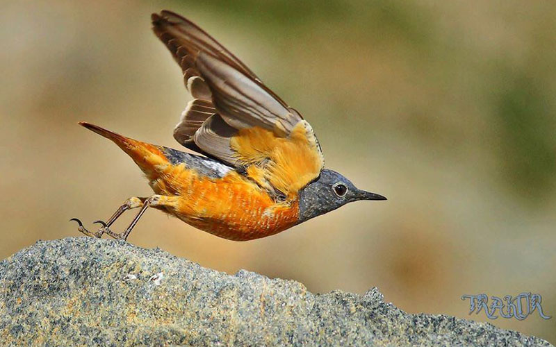 Denizli, kuş türü sayımında Türkiye ikincisi oldu