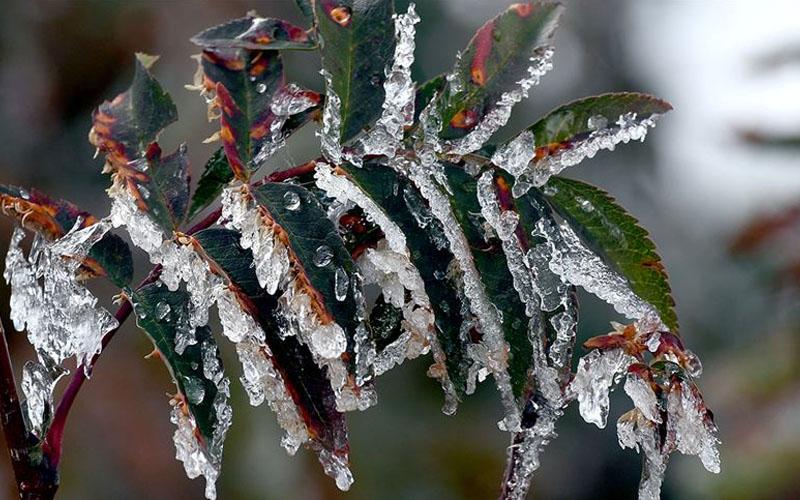 Mevsimler şaşırdı, zirai don uyarısı geldi