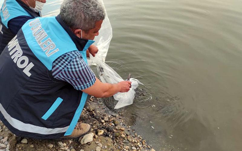 Denizli'deki göl ve göletlere balık bırakıldı