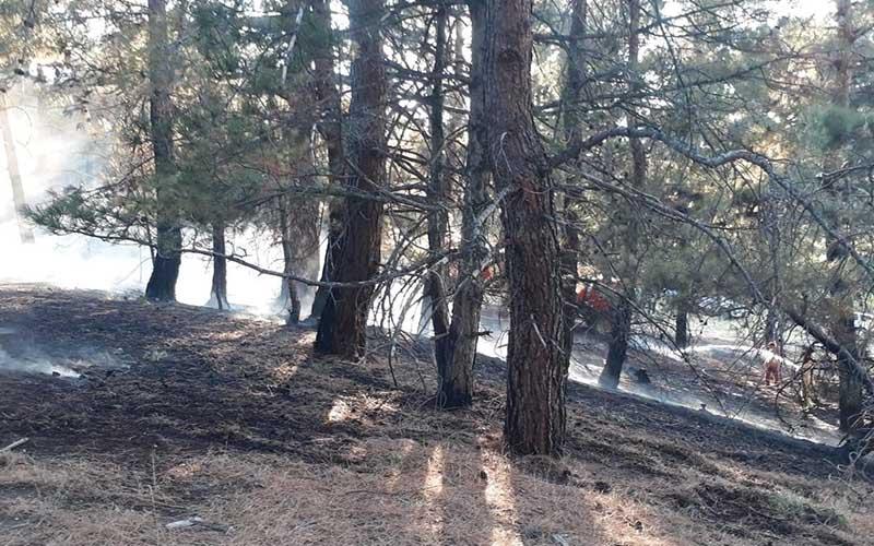 Honaz'daki orman yangını büyümeden söndürüldü