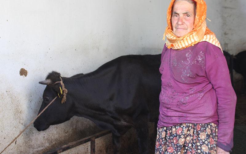 Sabiha Nine inekleri ile mutlu bir bayram geçiriyor