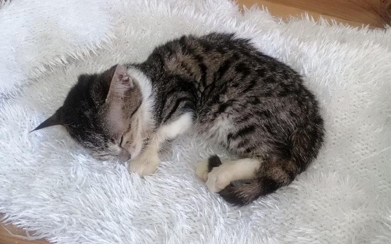 Sokak kedisinin tedavisi için yardım kampanyası