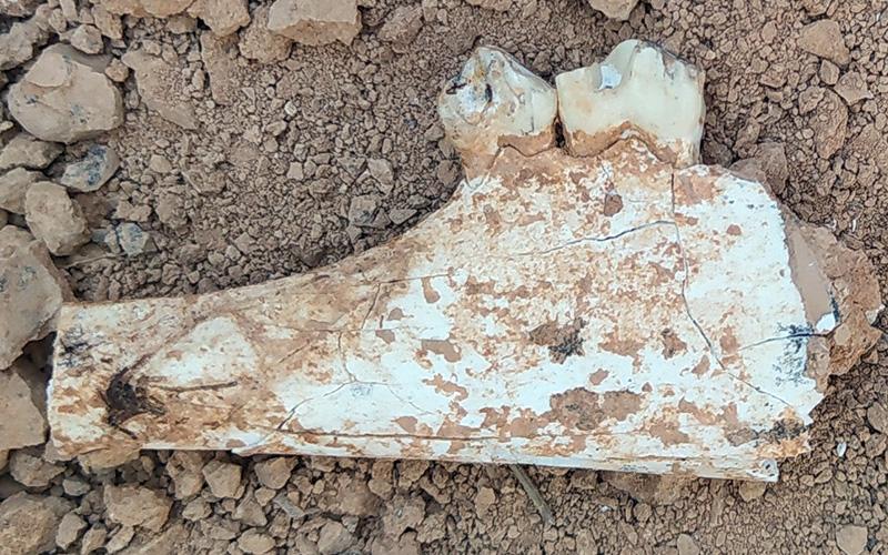 9 milyon yıl öncesine tarihlenen karıncayiyen ve fil fosilleri bulundu