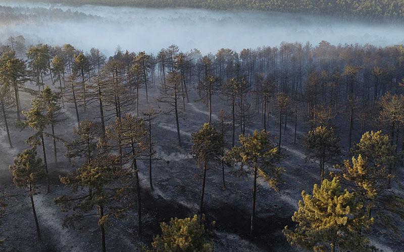 Pakdemirli: Çardak'taki yangında 200 hektar orman alanı yandı