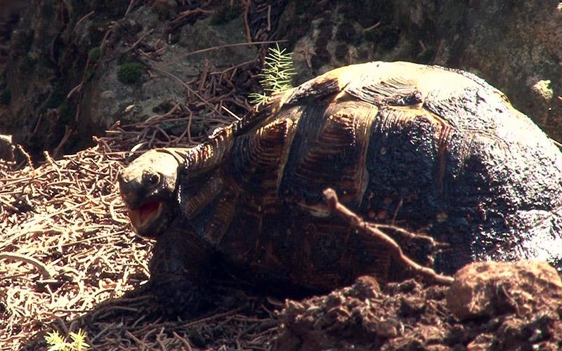Alevlerin içinde kalan kaplumbağanın fotoğrafı