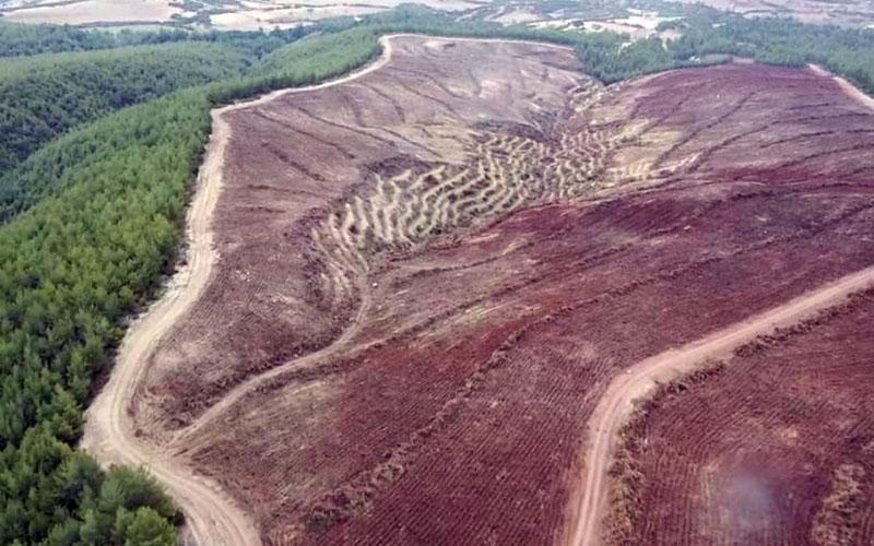 Endüstriyel Plantasyon Sahası oluşturulacak