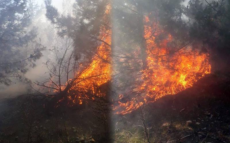 Çivril'deki yangında 3 dekar orman zarar gördü
