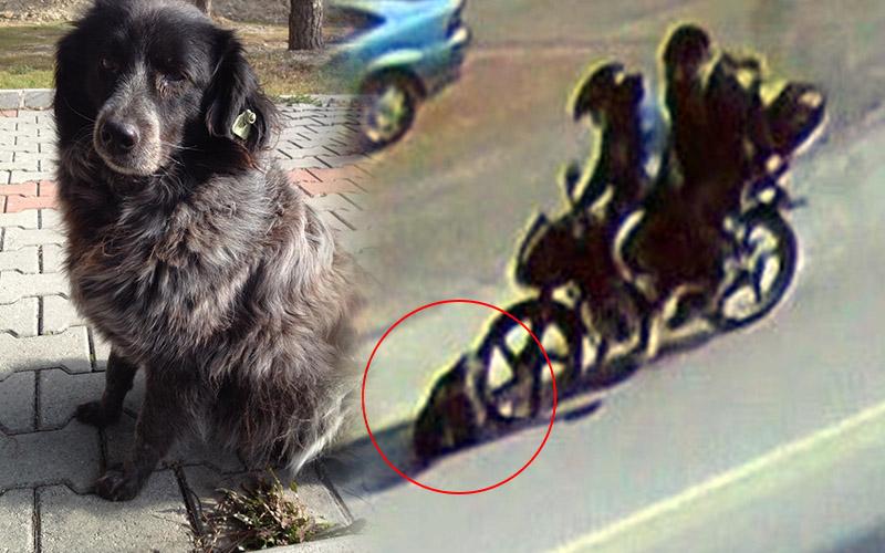Dikkatsiz sürücünün çarptığı köpek öldü