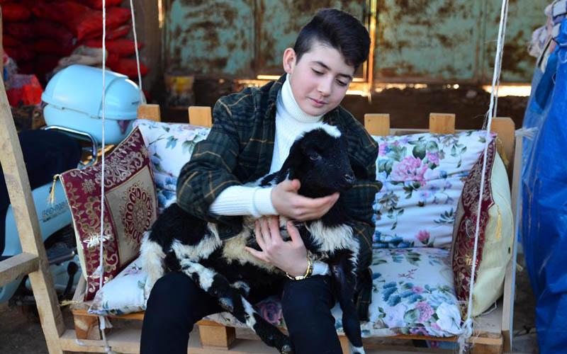İzzethan hem okuyor hem hayvancılık yapıyor