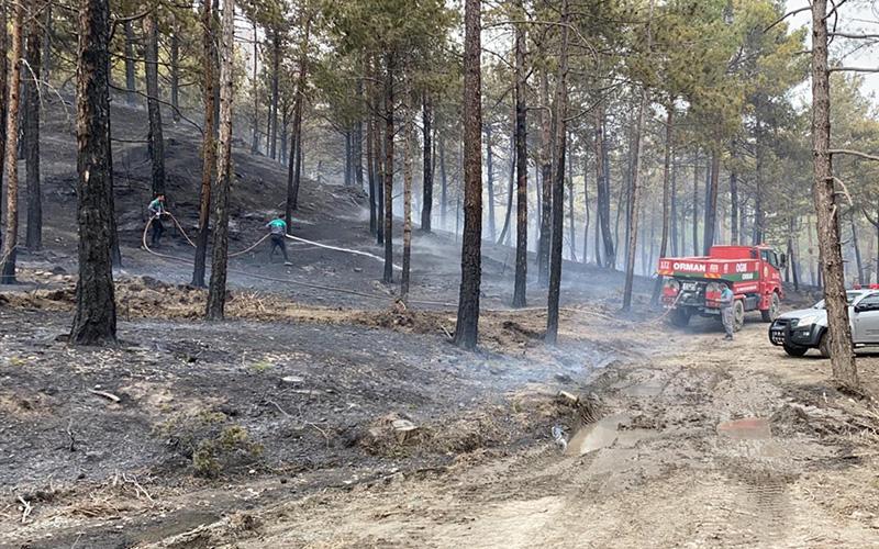 Orman yangınında 40 dekarlık alan zarar gördü