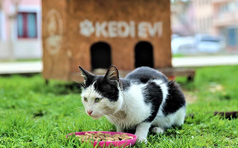 Pamukkale Belediyesinden pandemide sokak hayvanları için kulübe ve mama