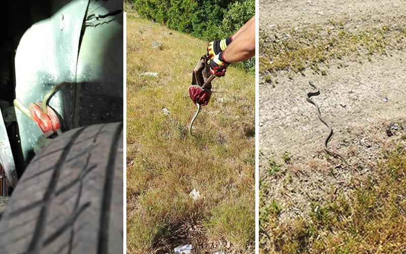 Arızalandı diye tamire götürülen araçtan yılan çıktı