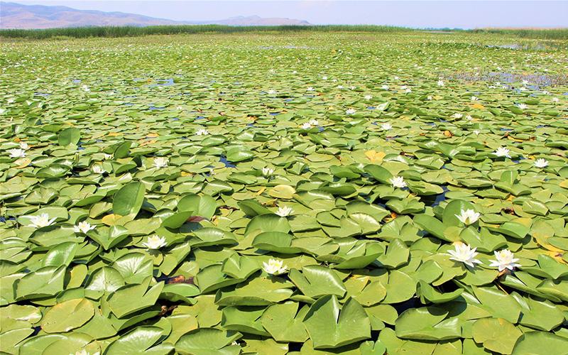 Denizli'nin nilüfer bahçesi Işıklı Gölü'nden büyüleyen manzara