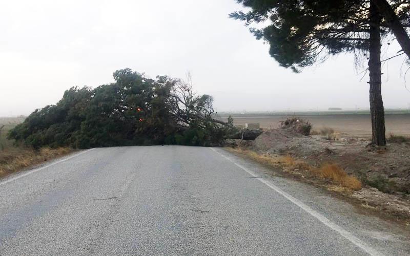 Fırtına dev çam ağacını karayoluna devirdi