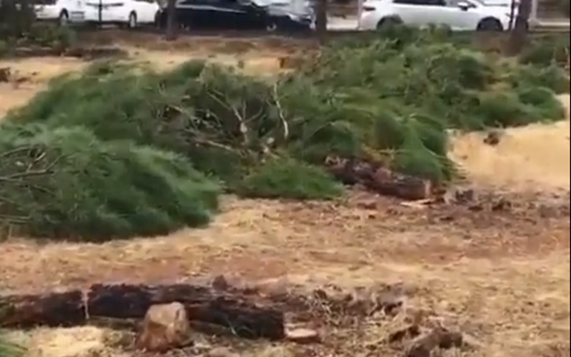Mahallenin ortasındaki çam ağaçları kesildi