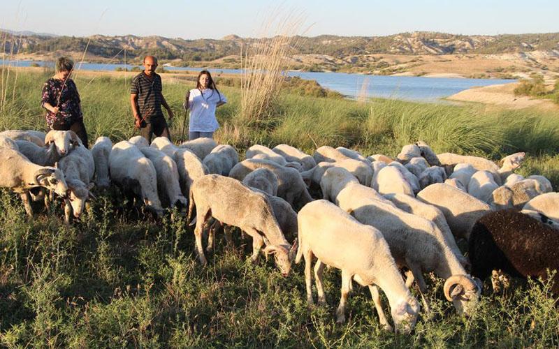 Üç yabancı dil bilen çobanlar