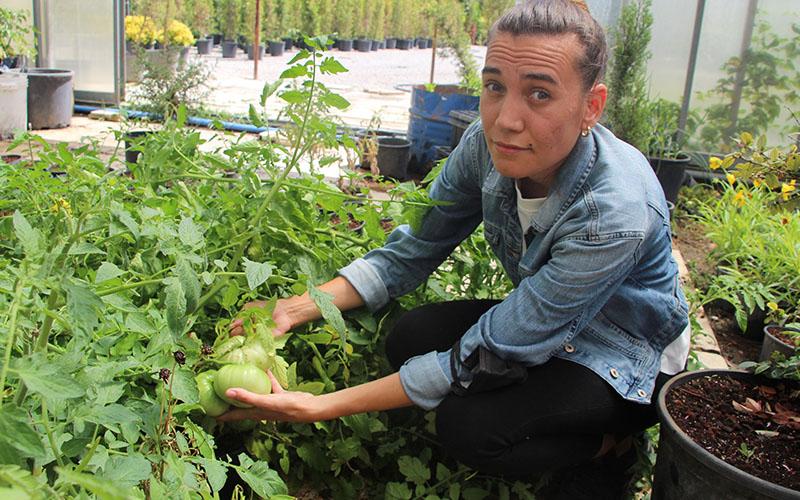 Baba-kız ata tohumunu korumak için üretim yapıp fidan dağıtıyor