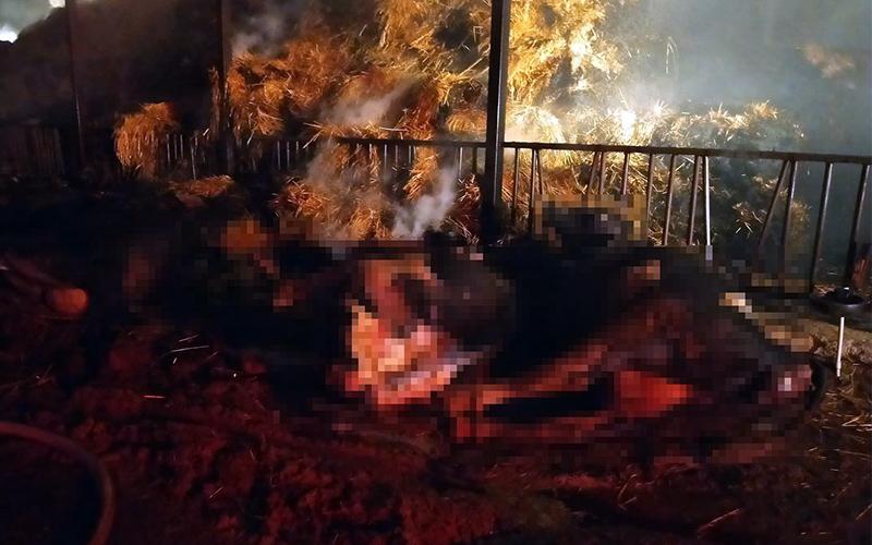 Çıkan yangında 22 büyükbaş hayvan telef oldu, besihane sahibi yaralandı