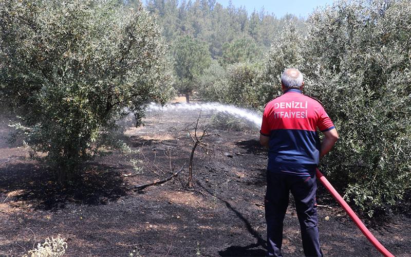 Orman yangınında 5 dönüm alan zarar gördü