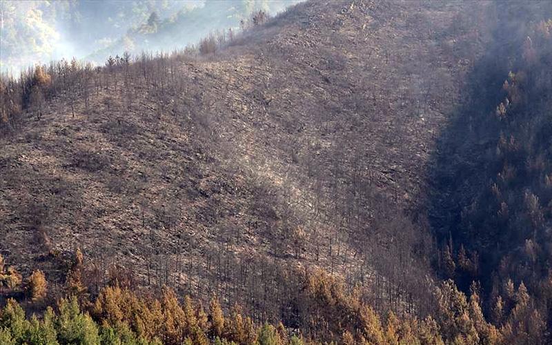 5 hektar ormanı kül eden yangının çıkış noktasında mangal bulundu