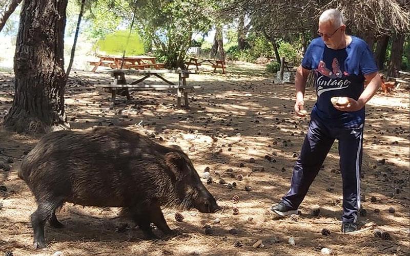 """Yaban domuzlarını besleyen gazeteci Muzaffer Kartal, """"cesarete bak"""" dedirtti"""