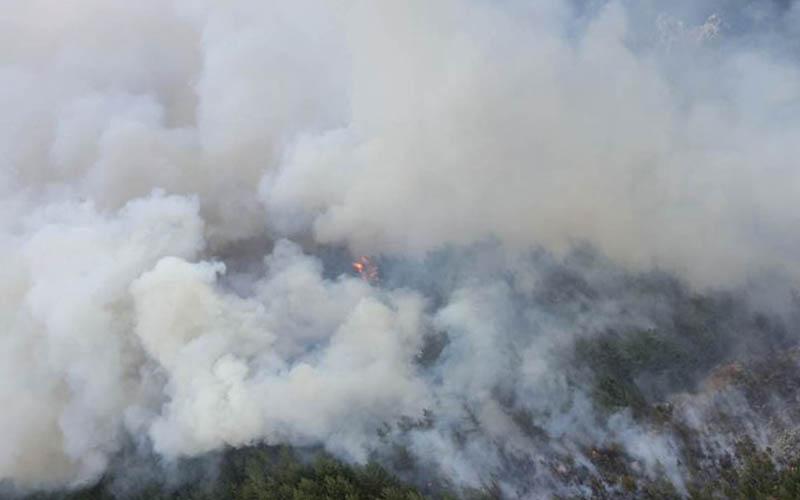 Orman yangını kontrol altına alındı, 8 hektar alan zarar gördü