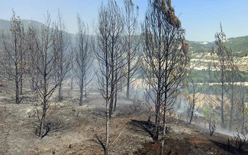 Acıpayam'da orman yangını çıktı