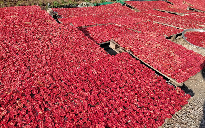 Evlerin bahçesi kışa hazırlıkla kırmızıya büründü