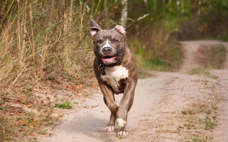 Bu köpekleri sahiplenen 11 bin lira ceza ödeyecek