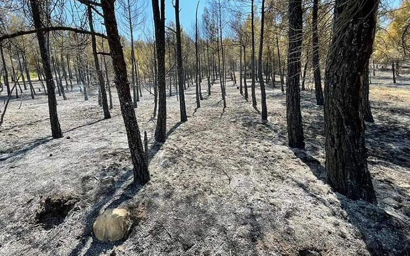 Yangında genç çam ağaçlarının bulunduğu orman zarar gördü