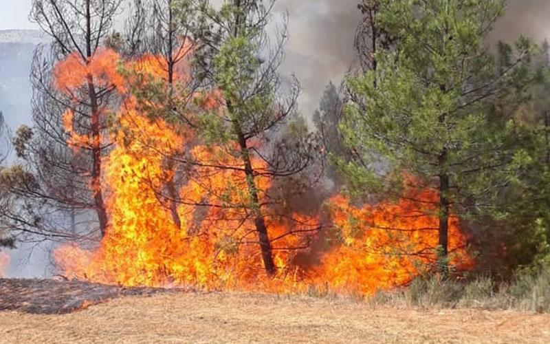 Orman yangınında kundaklama iddiası